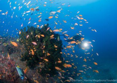 Potápění Mosambik 2020